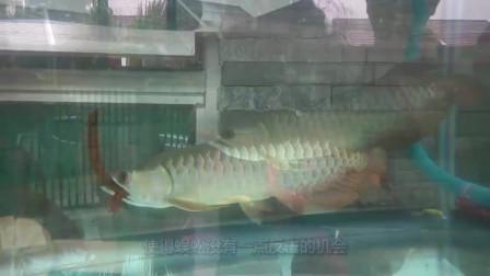 老外将一只蜈蚣丢进鱼缸,下一秒场面彻底失控,镜头记录全过程!