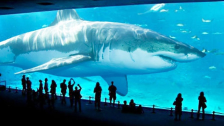全球最大的几种鲨鱼,第五见证了侏罗纪时代,大白鲨只能排到第三
