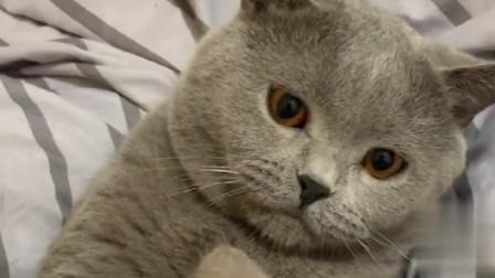 主人假装剃毛吓唬猫咪,猫咪的眼神太逗了,太可爱!