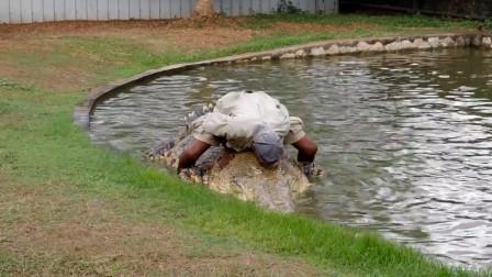 老人养了30多年鳄鱼,每天亲自喂它吃东西,鳄鱼从未放弃要吃他!
