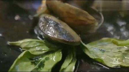 大美食:金不换炒薄壳 ,简单的搭配,成就了一道经典夏季味道