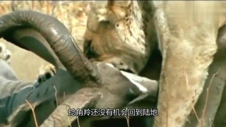 动物世界:狮子与羚羊之间的史诗大战,雄狮最后使出致命一招。