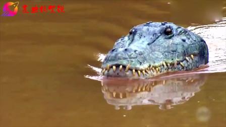 爆笑恶搞路人,用逼真的假鳄鱼吓唬游客?吓得