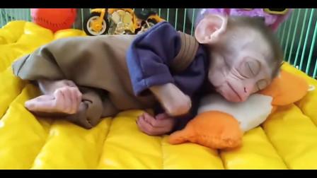 小猴子的可爱日常,每一幕都心动,太萌了!