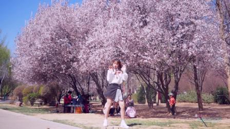 点击观看《女生版现代舞 桃花林的小姐姐跳舞视频》
