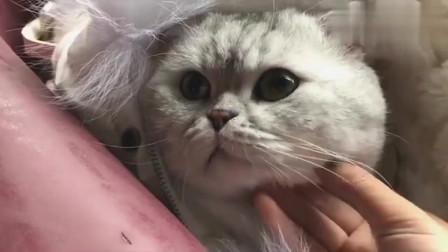 冬天躲在妹子羽绒服里的猫咪,果然活的不如猫!
