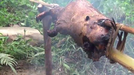 农村大妈上山搞野,意外抓到了一只大货,直接在野外烤着吃,真香