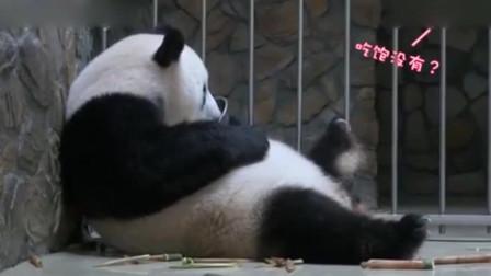 大熊猫妈妈不想带崽,听到饲养员喊要宝宝,主动转过身交出宝宝