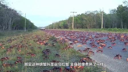 古巴螃蟹泛滥,当地人都快愁哭了,就算吃货军团来了也解决不了