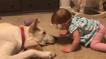 宝宝亲了一口趴在地上的狗狗,狗狗举动让人暖心
