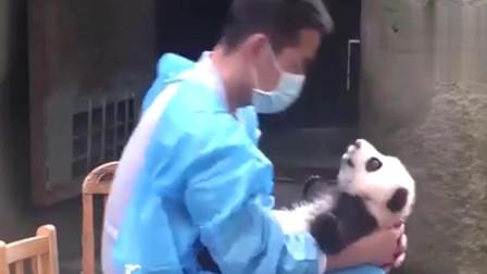 萌宠:专属奶妈给别的熊猫洗澡,熊猫吃醋了