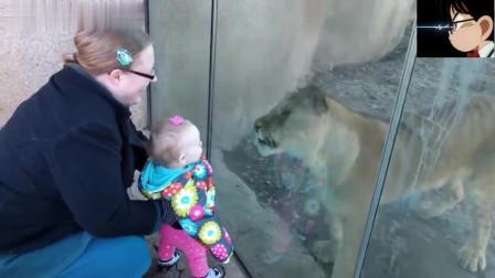 萌娃和萌宠的搞笑录像,这两者都是人间的小天使