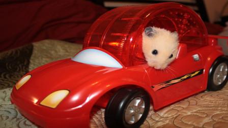 小仓鼠爬引擎盖上了,这是要干什么呢?