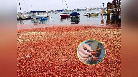 """""""最丢脸""""的入侵物种,漂洋过海来到中国,却败在中国吃货嘴里!"""