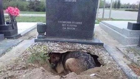 主人去世后,狗狗挖洞守墓3年,把狗狗拉出来时却发现意外惊喜