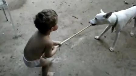 小主人拿棍子打狗狗,狗狗竟然把棍子抢过去了,狗狗举动令人暖心