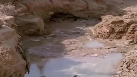 有一种鱼离开水4年,被晒成鱼干后还能活?放入水中那一刻奇迹发生了