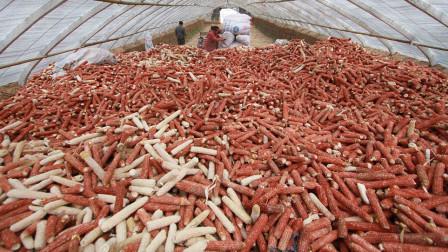 在中国被当成垃圾的它,却被韩国人奉为美食,2元一根都抢着买