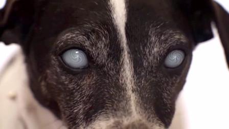 一只会说话的小狗,竟活了300年,原来它被神秘生物咬了!