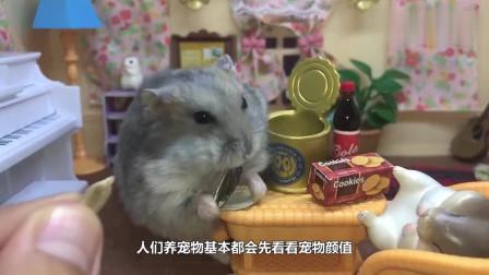 把仓鼠放进一大箱葵花籽中,下一秒憋住不要笑,镜头记录全过程