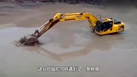 挖掘机正在工作,不小心挖到了一头冬眠的熊,镜头记录全过程