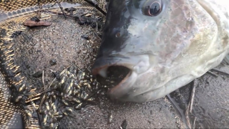 小伙捕到几条大鱼,捞上岸后意外画面出现了,不敢相信自己的眼睛