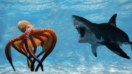 鲨鱼跟踪一只章鱼,正要袭击时却被反攻,网友:厉害了章鱼哥!