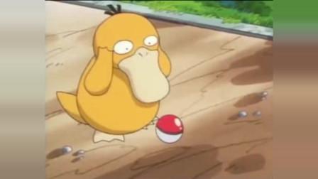 神奇宝贝:原来可达鸭是这样被收服的,看一次笑一次