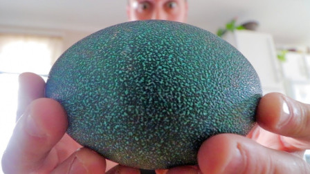 男子购买2枚巨蛋,孵化数十天后,一个呆萌的小可爱钻出来了.h265