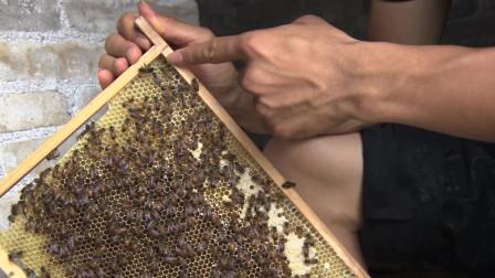 工蜂产卵和蜂王产卵有什么区别,养蜂人教你怎么去判断
