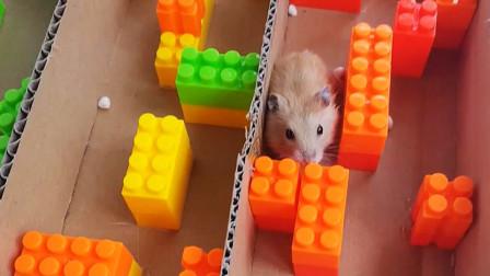 小仓鼠闯乐高迷宫,太好玩了!