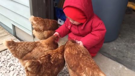 小女孩正在喂鸡,站起来意外就发生了,镜头拍下全过程