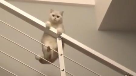 我家的楼梯变成了,喵星人的滑滑梯,很会玩