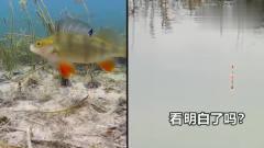 水下高清摄像机:破解鱼咬钩和浮漂举动的干系!