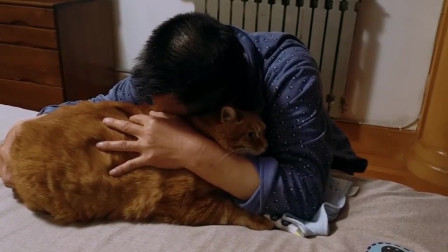 7年的橘猫,真的希望告别的时候来的晚一些