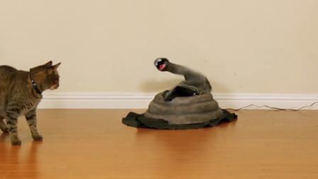 主人在家里放了一条假蛇,猫咪好奇凑过去,镜头拍下搞笑一幕