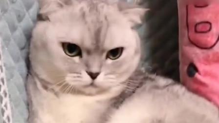 猫咪真小气,主人都不让摸,一摸它就要咬人