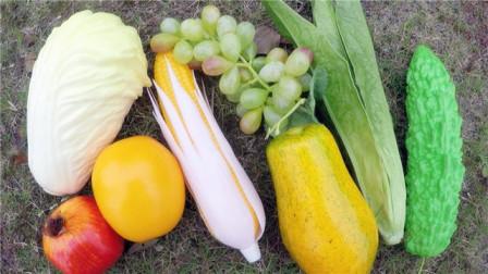 认识佛手瓜等8种水果蔬菜