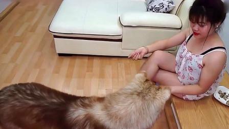 美女在家里边喂狗狗边跟狗狗玩,很有爱的一幕