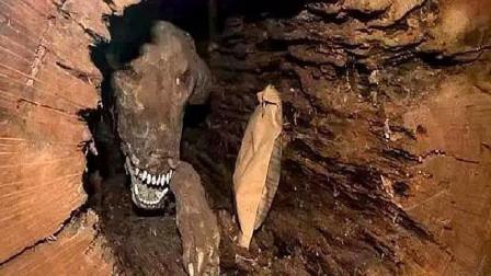 男子砍树时发现不对劲,树中有一只狗,足足被困在里面50年