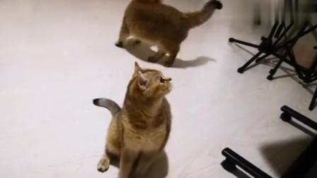 家有吃货猫咪,听到主人喊这俩字就会念念不忘,太逗了吧