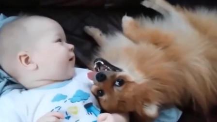 会让你大喊暖心的宝宝视频,猫猫的一个行为,第5秒我就流泪了!