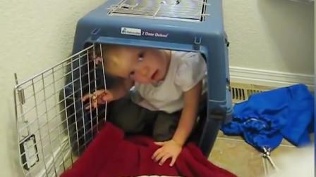 小宝宝和狗抢窝, 谁也不让谁, 汪:惹不起惹不起