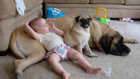 宝宝趴在狗狗身上突然放了个屁,下一秒狗狗这反应,笑哭了!