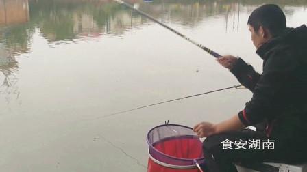 战黑坑还在用哪个商品饵料OUT了,现在流行红色颗粒粘麻团钓法接连上鱼