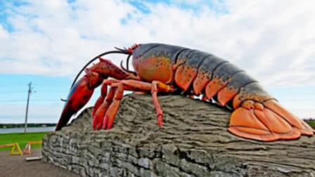 老外捕獲世界最大的龍蝦,重20斤長1米2,最后的結果卻讓吃貨失望