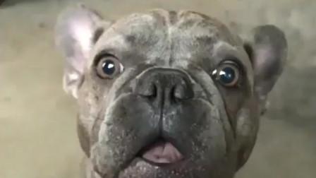 囧糖说美食:傻缺小狗狗的搞笑视频,你知道么?