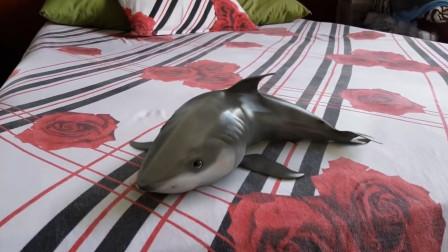 世界上第一个把鲨鱼当宠物养的人!跟狗狗一样听话还会装死