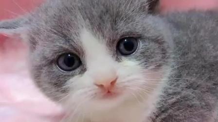 猫咪告诉你什么叫秒困,太可爱了