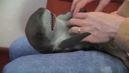世界上最听话的鲨鱼,仅此一条,有没有人想要养啊?